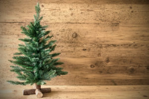 An unadorned Christmas tree, a Naked Tree